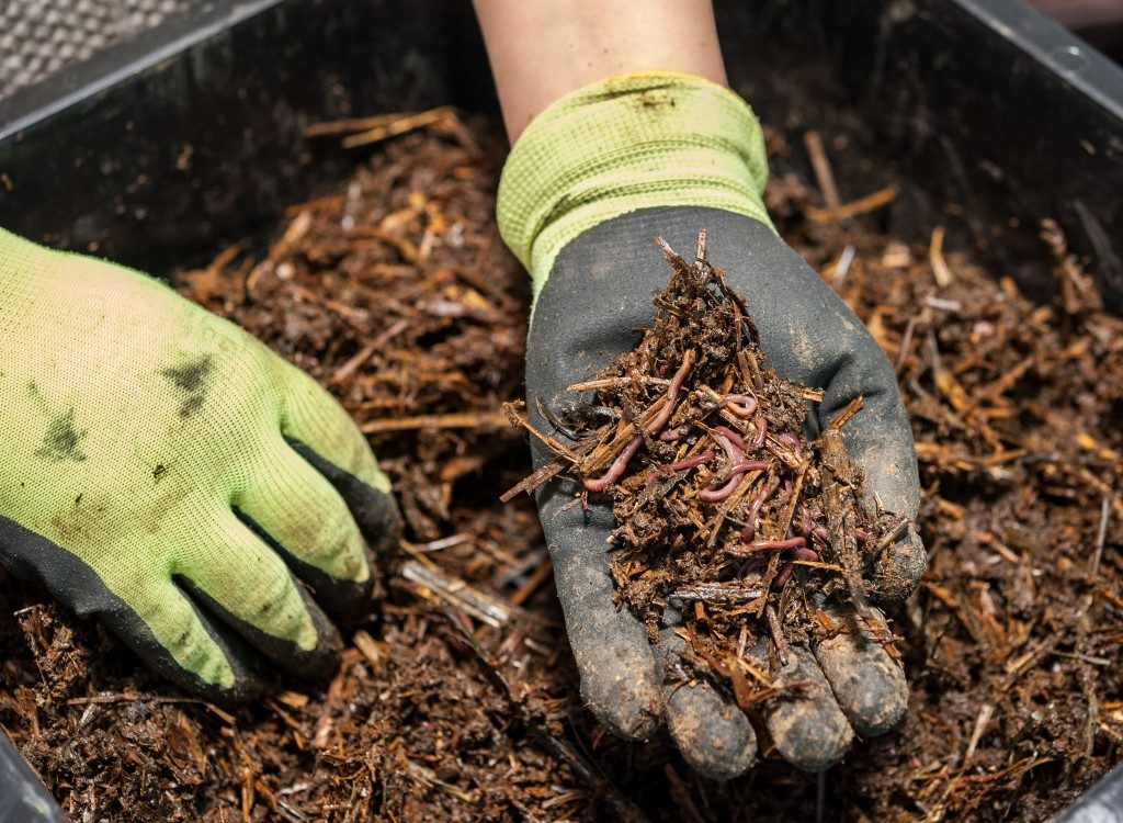 Worker holding a worm composting fertilizer