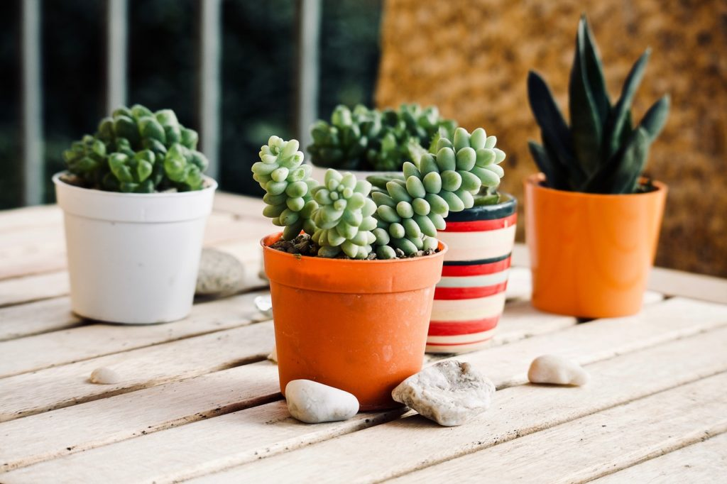indoor succulent garden