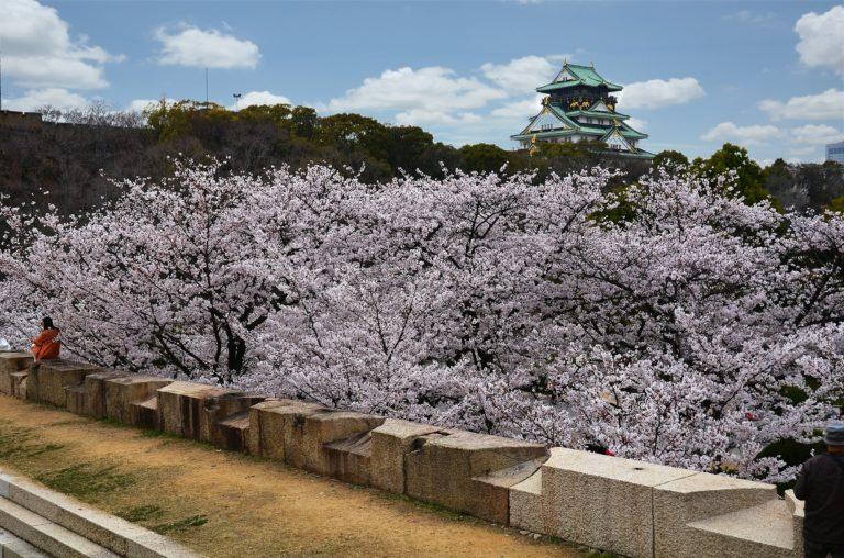 osaka cherry blossoms guide