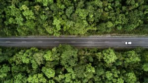 Road in the middle of forest
