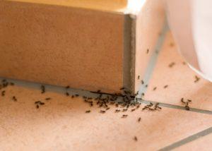bug infestation at home