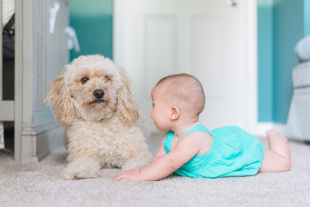 baby with a dog